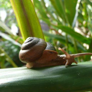 A Snail's Memoir